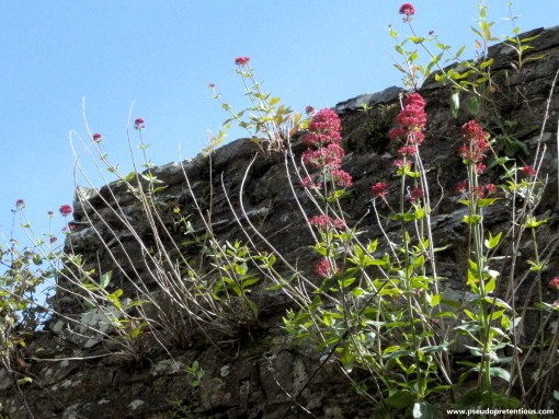 More wallflowers. They were EVERYWHERE!