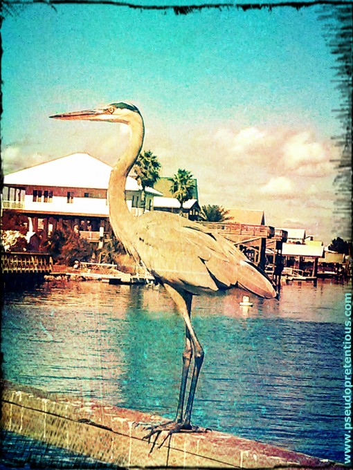 heron at keaton beach florida