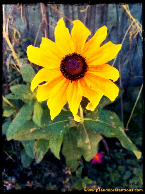 FL flower