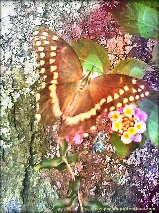 butterfly and wild lantana